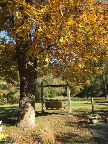 Front yard swing