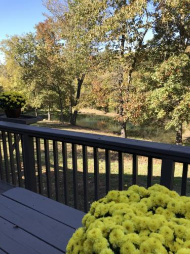 View of pond from deck